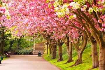 Spring Arrives In Marbella